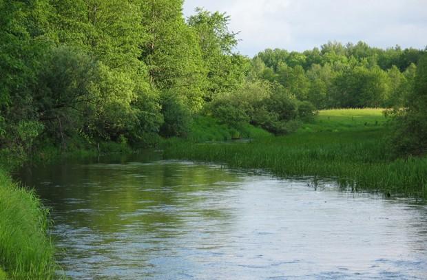Трава на течении - излюбленное пристанище для голавлей