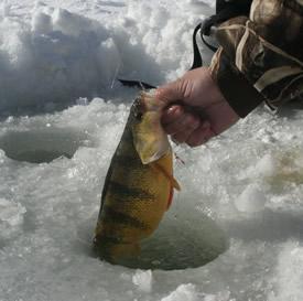 Ловля окуня зимой - очень увлекательное занятие