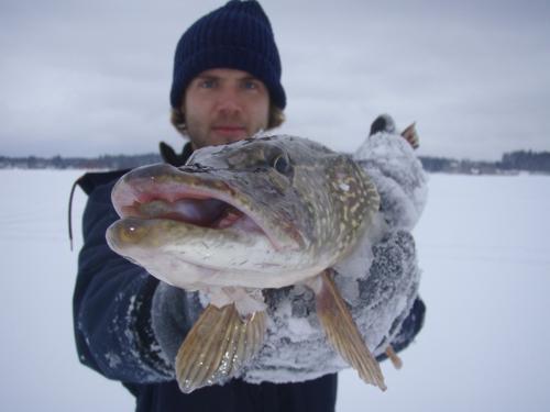 Зимняя щука - желанная добыча каждого рыболова
