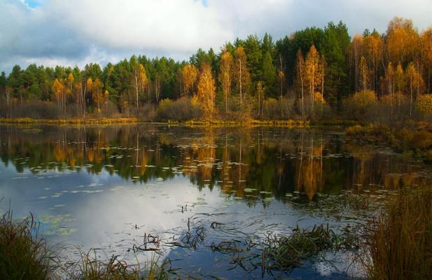 Перспективное место: проходим вдоль травы, подмучивая воду ногами или руками